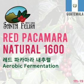 Red Pacamara Natural 1600 Heap + Aerobic Fermentation(SOLD OUT)
