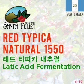 Red Typica Natural 1550