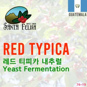 Red Typica Yeast Fermentation